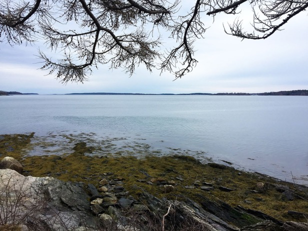 Mackworth Island, Falmouth (8)