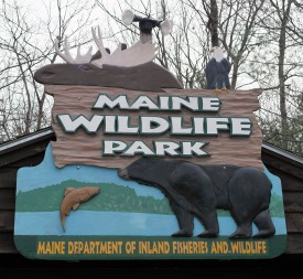 Maine Wildlife Park, Gray, Maine