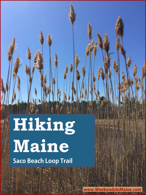 Ferry Beach Loop Trail | Saco, Maine