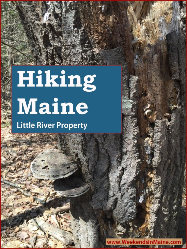 Little River Property | Gorham, Maine
