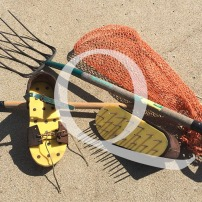 Blog Post: Q is for Clam Digging for Quahogs