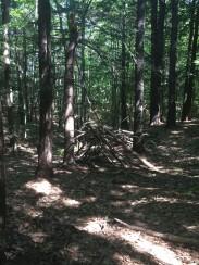 Fore River Sanctuary (3)