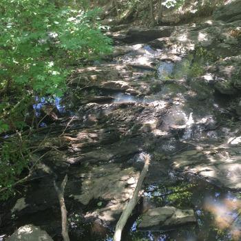 Fore River Sanctuary (9)