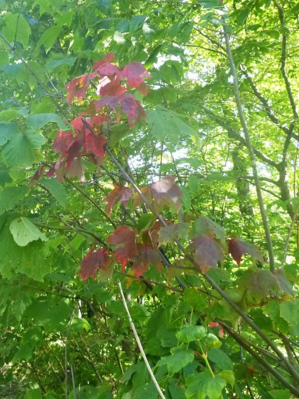 Fall Beginnings