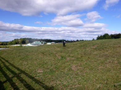 pineland-farm-8