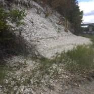 Great Salt Bay Preserve (12)