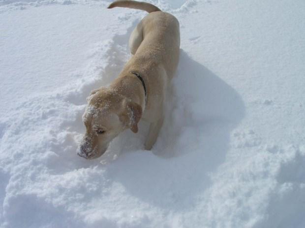 Darcy Snowballs (4)
