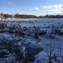 Fore River Sanctuary (3)