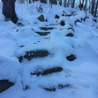 Fore River Sanctuary (5)