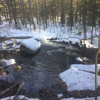 Mill Brook Preserve (4)