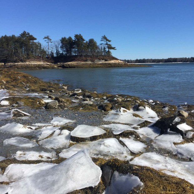 Wolfe's Neck State Park (5)