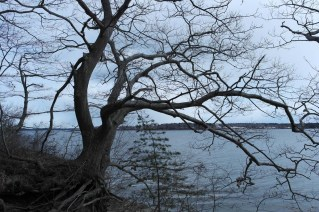Littlejohn Island Preserve
