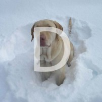 D is for a Determined Dog Chasing Snowballs
