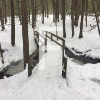 F is for Four Winter Hikes and Extra Points in Scattegories