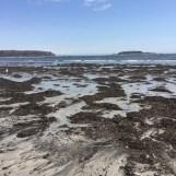 Goose Rocks Beach (6)