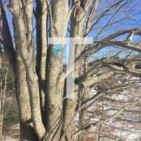 T is for Trees and Trail Markers