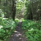 Carrabassett Valley Hike