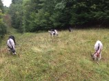 Goats (19)